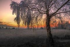 Утро зимы в Teufelsmoor около Бремена Германии Стоковые Изображения RF