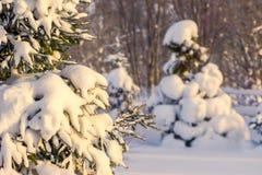 утро зимы, деревья под снегом, много снегом, деревьями перерывов снега, мелкой глубиной поля стоковое фото