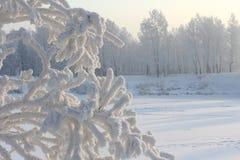 Утро зимы морозное на речном береге Стоковые Изображения