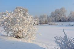 Утро зимы морозное на речном береге Стоковая Фотография