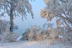 Утро зимы морозное на речном береге Стоковые Изображения RF