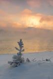 Утро зимы морозное на речном береге Стоковое фото RF