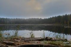 Утро зимы пруда осеннее холодное Стоковое Изображение RF
