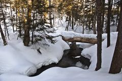 Утро зимы Стоковое фото RF