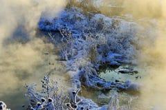 Утро зимы Стоковое Фото