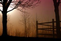 Утро зимы Стоковые Изображения RF