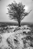 Утро зимы Стоковое Изображение RF