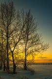 Утро зимы Стоковое Изображение