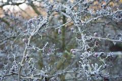 Утро зимы Стоковые Фотографии RF