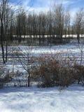 Утро зим Стоковые Фотографии RF