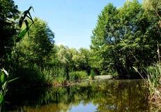 Утро июнь Река было окружено деревьями Стоковые Изображения RF