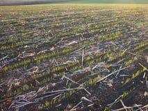 Утро конца лета насилует предпосылку поля после сбора стоковые фотографии rf