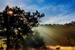 утро ландшафта осени туманное на речном береге в роще дуба Стоковое Изображение RF