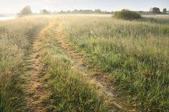 утро ландшафта стоковое изображение rf