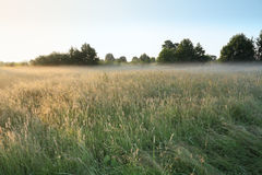 утро ландшафта Стоковые Изображения