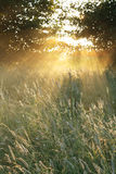 утро ландшафта стоковая фотография rf