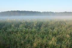 утро ландшафта Стоковая Фотография
