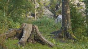 Утро лета в мистических древесинах Красивые виды в древесинах fairy пуща Стоковые Фото
