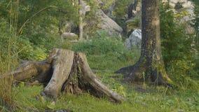 Утро лета в мистических древесинах Красивые виды в древесинах fairy пуща Стоковое фото RF