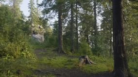 Утро лета в мистических древесинах Красивые виды в древесинах fairy пуща Стоковое Изображение RF