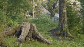 Утро лета в мистических древесинах Красивые виды в древесинах fairy пуща Стоковые Изображения RF