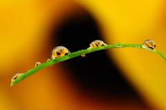 утро макроса травы росы сверх Стоковые Фото