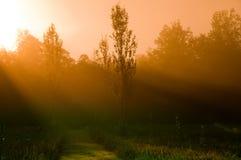 утро мистическое Стоковые Изображения RF