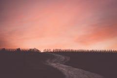 Утро на винограднике Стоковые Фото