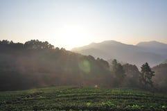 Утро на красивой ферме клубники Стоковое фото RF