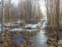 Утро на дороге леса Стоковые Изображения