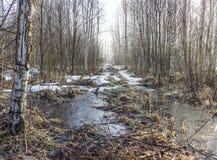 Утро на дороге леса Стоковая Фотография