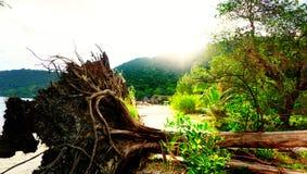 Утро на пляже kohrong стоковая фотография rf