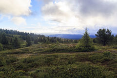 Утро на плато, Норвегия Стоковые Изображения