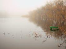 утро озера лягушки Стоковое Изображение