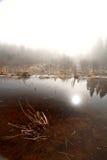 утро озера туманное Стоковые Фото