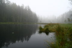 утро озера Стоковое Фото