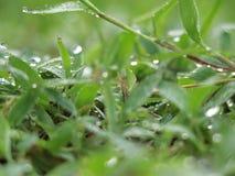 Утро орошает на траве Стоковая Фотография