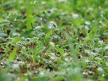Утро орошает на траве Стоковое Изображение RF