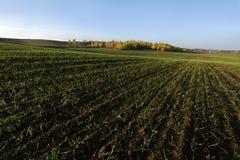 Утро осени в обрабатываемой земле Стоковое фото RF