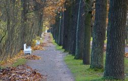 Утро осени в парке Катрина в Tsarskoe Selo Стоковые Фото