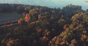 Утро осени, деревья осени, вид с воздуха трутня видеоматериал