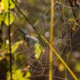 Утро осени и сеть ` s паука на заводах Стоковые Изображения