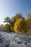 утро осени морозное Стоковая Фотография RF