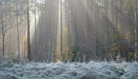 утро осени морозное Стоковая Фотография