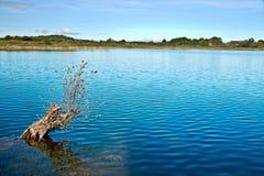 Утро осени на ирландском озере стоковая фотография