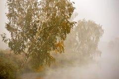 Утро осени туманнейшее Деревья березы на речном береге Стоковые Изображения RF