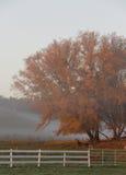 утро осени туманнейшее Стоковая Фотография