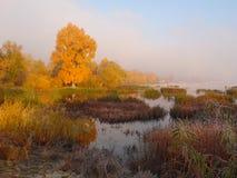 Утро осени Стоковое Фото