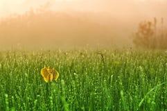 утро падений росы Стоковые Фото