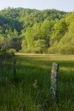 утро поля загородки Стоковая Фотография RF